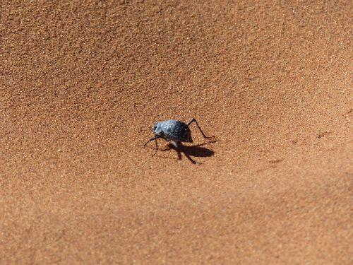 Sossusvlei,vabalas,Namib dykuma,Wüstensand,dykuma,smėlis,vabzdys,nuskaityti,gyvūnas