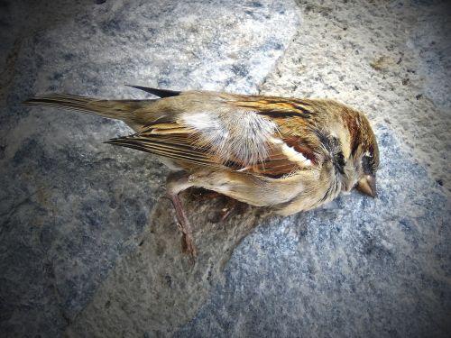 žvirblis,miręs paukštis,metafora,transcendencija,miręs