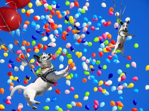 spassfototo,šuo,balionai,spalvinga,spalvingi balionai,balionas,spalva,knallbunt,skristi,balionai,linksma,plūdė,stebuklas,juokinga,dangus,oras,atvirukas,lengvumas,nauja pradžia,meilė,širdis,gimtadienis,patobulinti,sėkmė,nuleisti,juokinga nuotrauka,komponavimas,vaizdo manipuliavimas,fotoshop,džiaugsmas,gyvenimo džiaugsmas,humoras,juokinga nuotrauka
