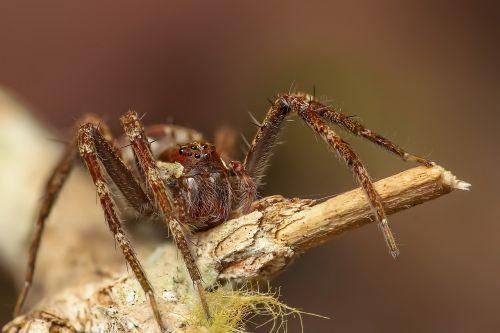 voras,vabzdys,makro,gyvūnas,laukinė gamta,detalus,didinimas