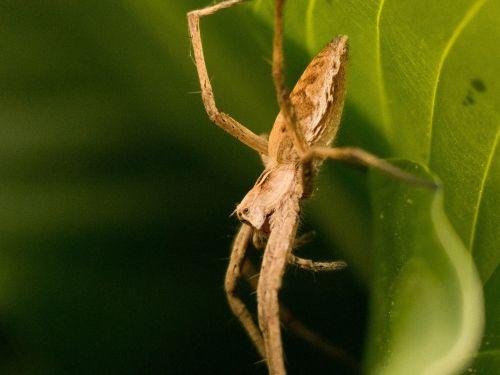 voras,sodas,gamta,gyvūnas,vabzdys,arachnid,makro,Uždaryti,makrofotografija,gyvūnų pasaulis