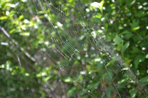 voras,drobė,voratinklis,makro,gamta