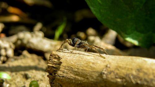 voras,makro,nariuotakojų,vabzdys,gyvūnas,sodas,nariuotakojų,išvados