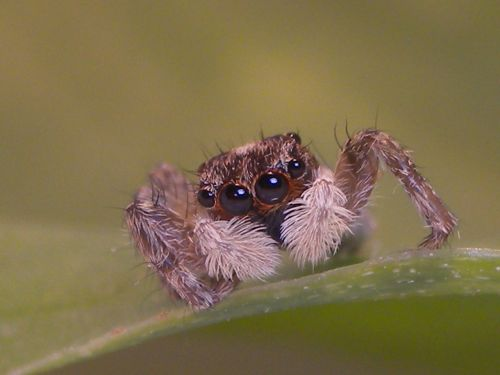 voras,makro,vabzdžiai