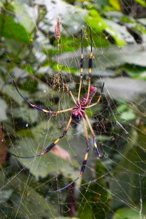 voras,gamta,drobė,atogrąžų miškai
