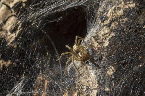 voratinklis,voras,vabzdys,apšvietimas,nora,skylė,ruduo,gamta,gyvoji gamta,nariuotakojų,vasara,arachnofobija,ukraina,šviesa,Indiška vasara,internetas,paukhek,laukinė gamta,lotynų