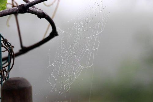 voratinklis, rūkas, rytą, Rosa, pobūdį, šlapias, makro, vasara, lašai, ne žmogus
