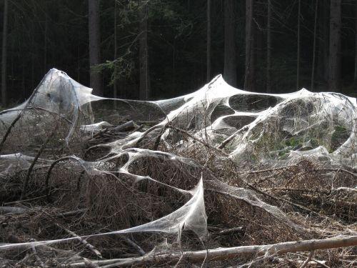 vorai,keista,miškas,gamta,niūrus,voratinklis,baisu,creepy