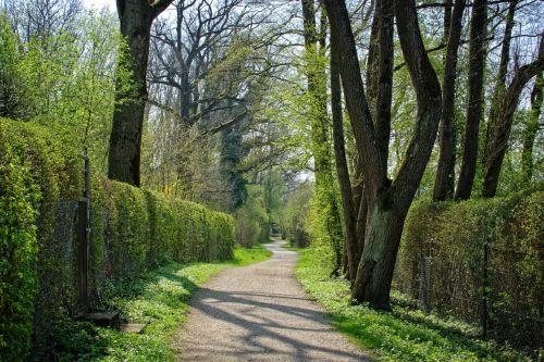 pavasaris,toli,medžiai,gamta,miškas,alėja,žalias,Promenada,takas,atsigavimas,vaikščioti,žygiai,miško takas,nuotaika,medžio pamušalas,laisvalaikis,gamtos takas