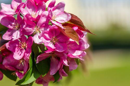 gėlė, gėlės, sodas, parkas, nuolaida, pavasaris, raudona, žalias, mėlynas, pavasaris