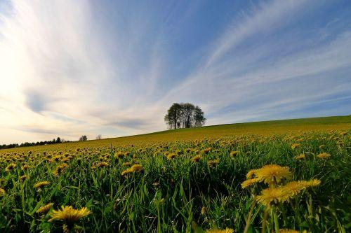 pavasaris,žiedas,žydėti,žydintis pievas,gėlės,geltona,gamta,žydėti,pavasaris