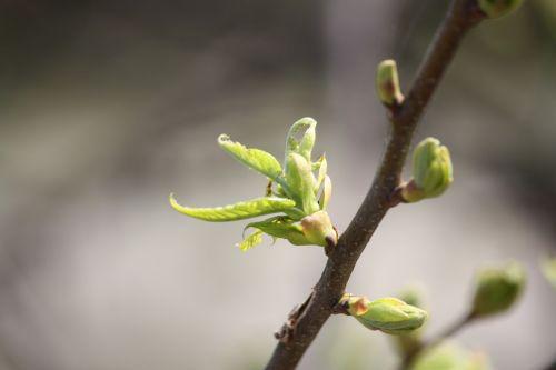 pavasaris,budas,gyvenimo jėga