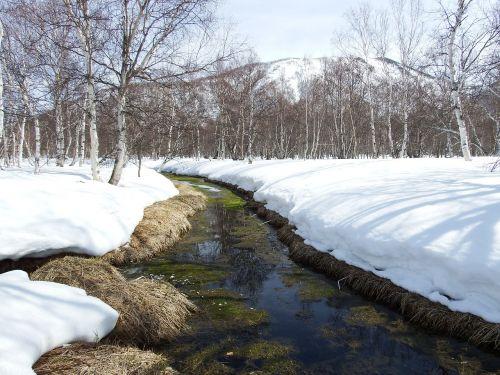 pavasaris,sniego tirpimas,puddles,šiluma,miškas,atspindys,lydalo vanduo,gamta,kraštovaizdis,medžiai,tyla,upelis,kanalas,samanos,žalumos,beržas,sniegas,sniego dramos