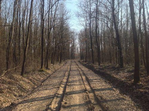 pavasaris,kelias,dulkėtas kelias,purvinas kelias,purvo kelias,miškas,gamta,kelionė