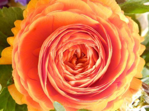 Pavasaris,  Gėlė,  Žiedas,  Žydėti,  Oranžinė