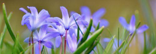 pavasario pieva,laukinės vasaros spalvos,mėlynas,gėlės,pavasaris,gėlė,pieva,gėlių pieva,augalas,gamta,vasara,žolė,vasaros pieva