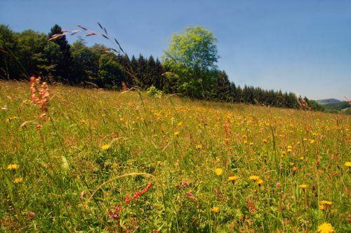 Pavasario Pieva, Gėlių Pieva, Laukinės Gėlės, Pavasaris, Pieva, Laukinės Vasaros Spalvos, Rhon Pieva
