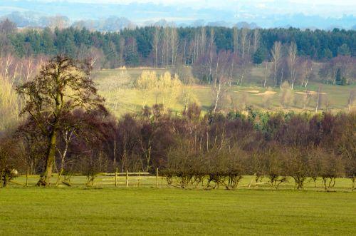 kraštovaizdis, medis, pavasaris, filialai, filialas, gamta, sezonai, žolė, lapai, lapai, ruduo, spalvos, žalias, dangus, debesis, Debesuota, mėlynas, saulėtas, pavasario sezonai Anglijoje