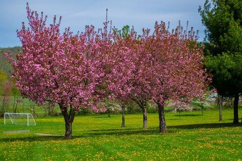 Pavasaris, pavasaris, pobūdį, žiedas, žydi, filialas, saulės, šviesos, žalias, botanika, medis