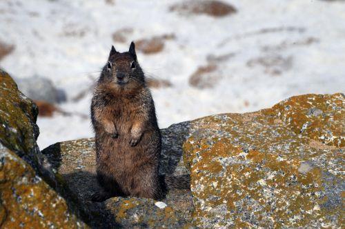 žemės & nbsp, voverė, voverė, gyvūnas, žinduolis, laukiniai, mielas, Iš arti, pūkuotas, voverė žiūri į mane