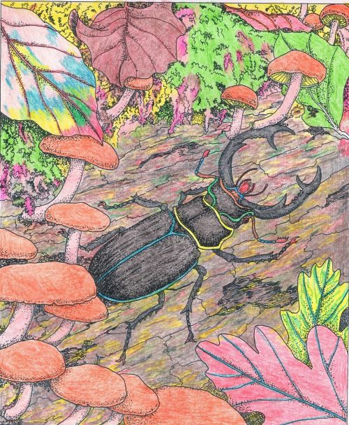 briedis, vabzdys, entomologija
