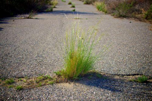 blacktop, aplinka, žolė, žalias, žaluma, augimas, gyvenimas, senas & nbsp, kelias, kelias, kelio, stiebai, stiebai & nbsp, žolė, žolės stiebai kelyje
