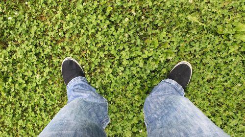 stovi ant žolės,džinsai,dobilas,žolė,mėlyni džinsai