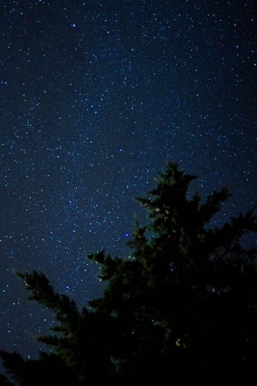 žvaigždė,estrellano dangus,naktis,medis,dangus,kraštovaizdis,naktinis dangus,tamsa,naktinis matymas