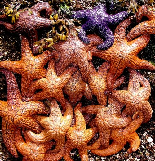 žvaigždės,vandenynas,gyvenimas,spalvinga,laukinė gamta,Jūros gyvenimas,gamta,jūra,jūrų,masė,jūrų bestuburiai,rankos