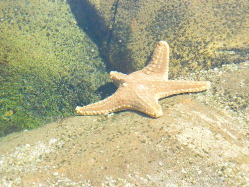 žuvis, žvaigždės, papludimys, Jūros gyvenimas, jūrų, gamta, vandenynas, jūra, roko & nbsp, baseinas, žvaigždynas