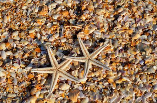 žvaigždės,Jūros gyvenimas,gyvūnas,koralas,gyvenimas,jūrų,vandenynas,jūra,žvaigždė,žuvis,vandens,rifas,egzotiškas,gamta,atogrąžų,povandeninis,laukiniai,laukinė gamta,natūralus,sūrus vanduo,papludimys,kriauklės,fonas