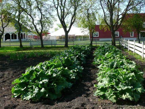 steinbach,Mennonito palikuonys,sodininkystė,daržovės,manitoba,Kanada,Miestas,kaimas