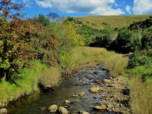 kalnai, upė, srautas, žolė, medžiai, gamta, sterkspruit upė, Drakensbergas