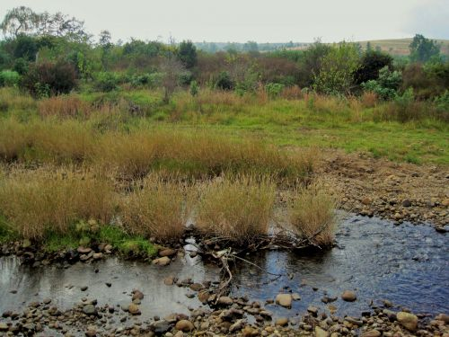 upė, srautas, vandens, žolė, medžiai, akmenukai, sterkspruit upė, Drakensberg