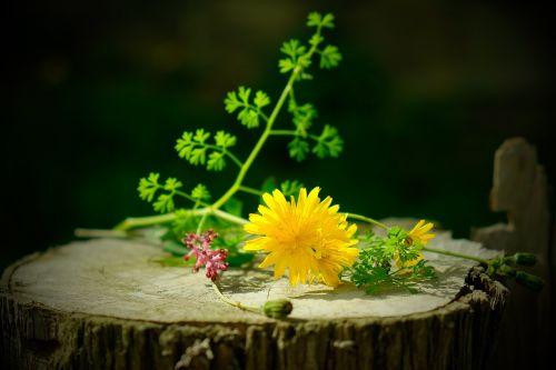natiurmortas,laukinės gėlės,gėlė,augalų laukiniai gyvūnai,laukinė gėlė,gėlės,laukiniai,mediena,gamta,augalai,laukinės žolelės,violetinė