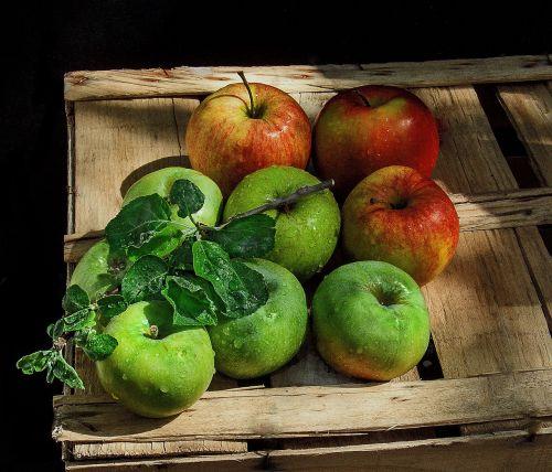natiurmortas,obuoliai,dėžė,sprigas
