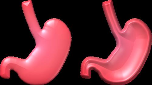 skrandis,sveikata,tuščia,pilnas,3d,3 d,organas,žmogus,kūnas,dalis,spalva,rožinis,raudona,persikas,skerspjūvis,skerspjūvis,viduje,vidaus,vidaus vidaus virškinimas,virškinimas,medicinos,pilvas,grafika,grafika,cg,skaidrus,izoliuotas,vaizdas,pic,nuotrauka,nustatyti,figūra