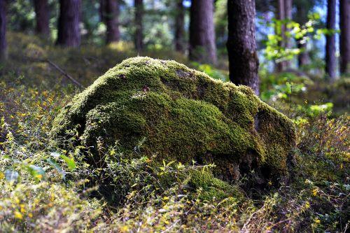 akmuo,bemoost,miškas,gamta