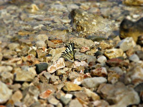 akmuo,drugelis,vabzdys,gamta,skraidantys vabzdžiai