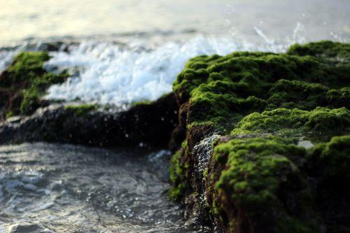 akmenys,samanos,vanduo,bangos,Krantas,kranto,Rokas,žalias,gamta,paviršius,samanos,padengtas,judėjimas,vandenynas,jūra,šlapias