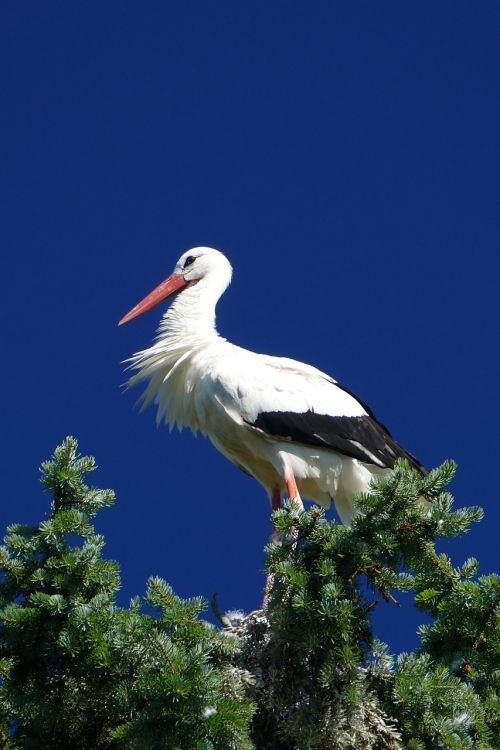 gandras,paukščio parkas,Walsrode,parkas,makro,paukščių parkas Walsrode,paukštis,lizdas,trejetas