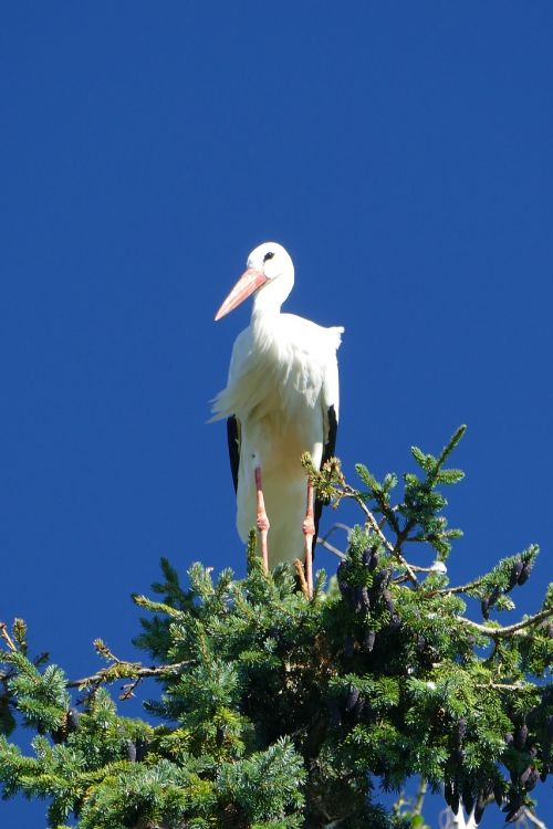 gandras,trejetas,paukščio parkas,Walsrode,parkas,makro,paukščių parkas Walsrode,paukštis