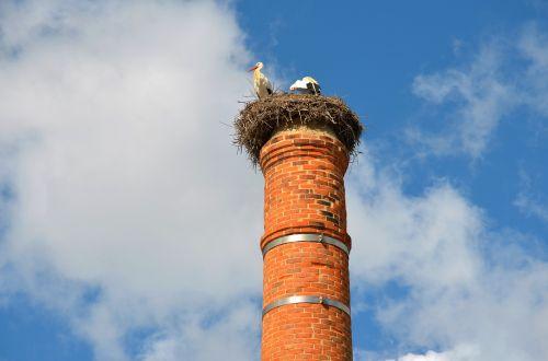 gandras,paukštis,gandralo lizdas,lizdą,kaminas,lizdas ant kamino