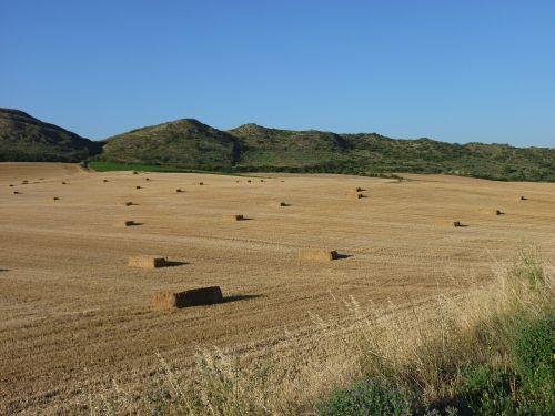 šiaudai,Žemdirbystė,kraštovaizdis,laukas,grūdai,šiaudai,auksinis,Ispanija,jakobsweg
