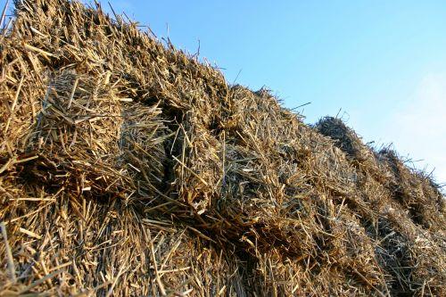 šiaudai,išdrįsti,šiaudai,Žemdirbystė,kaimas,derlius,laukas,ritinys,pieva,derliaus metas,atsargos,džiovintos žolės,gamta,šiaudų derlius,laukai,Vokietija,šiaudai,Halme,geltona,ruda,smėlio spalvos