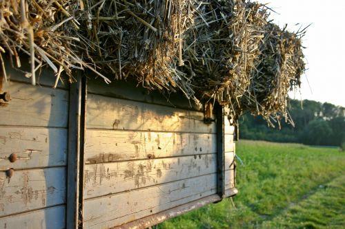 šiaudai,išdrįsti,šiaudai,Žemdirbystė,kaimas,derlius,laukas,ritinys,pieva,derliaus metas,atsargos,džiovintos žolės,gamta,šiaudų derlius,laukai,Vokietija,šiaudai,Halme,geltona,ruda,smėlio spalvos,priekabos