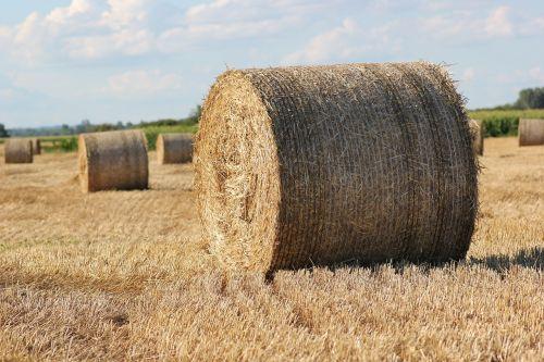 šiaudų ryšulys,1000 kg,Žemdirbystė,lauke,didelis,apvalus,maistas