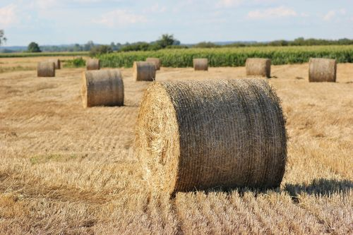 šiaudų ryšulys,1000 kg,Žemdirbystė,maistas,vasara,pieva,lauke