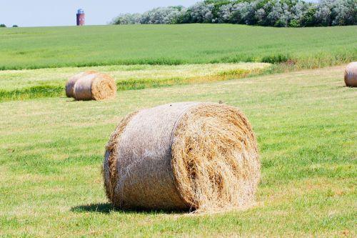 šiaudai,šiaudai,pieva,laukas,šienas,žalias,žolė,pjauti,rügen