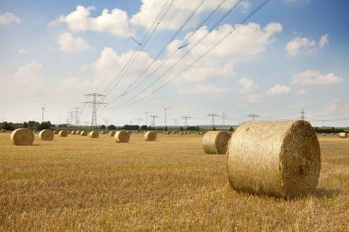 šiaudai,gamta,laukas,rutuliai,šienas,šiaudai,derlius,šieno ryšulius